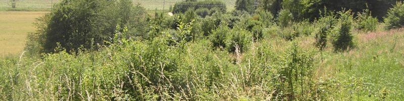 Prázdné pozemky – nová iniciativa přístupu k půdě