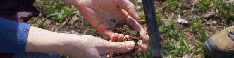 Zapojte se do průzkumu: Jaký je váš vztah k půdě?