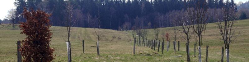 Vlastním půdu. Co můžu udělat dobrého pro půdu a krajinu?