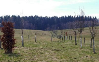 Vlastním půdu. Co můžu udělat dobrého pro půdu akrajinu?