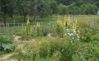 Návštěva Biostatku Valeč – malebná krajina azdravá půda