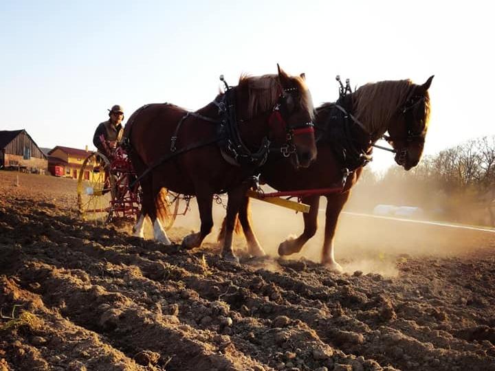 Jak postupují přípravy vzdělávací farmy Konipas?