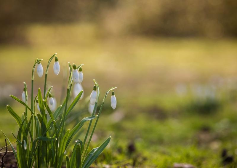 Jarní půda vdenním životě